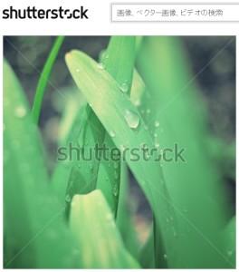 葉の上の雨粒