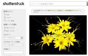 黄色い花のしぶき