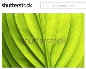 マクロな葉の背景