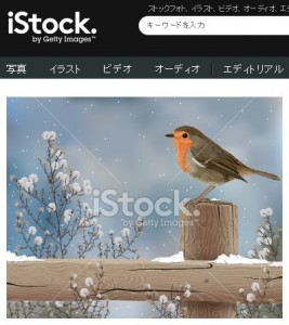 冬の日のコマドリ