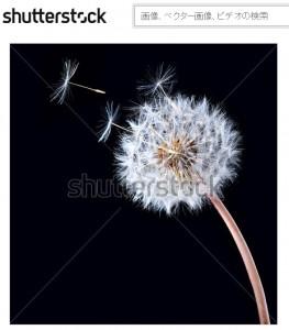 タンポポの綿毛から飛び出した種